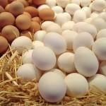 Немного о яйцах. Что, где и как